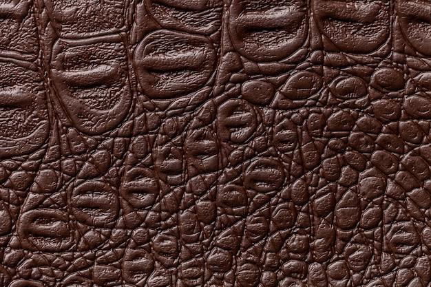 Fundo da textura do couro do marrom escuro, close up. pele de réptil, macro.