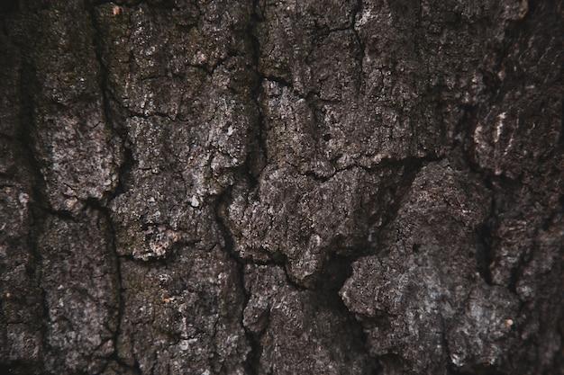 Fundo da textura do relevo da casca marrom de uma árvore. papel de parede para dispositivo