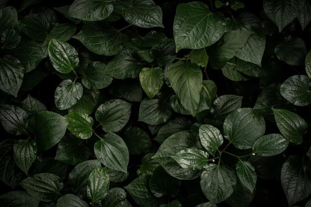 Fundo da vista superior da textura das folhas verdes. quadro completo de tom de folha verde escuro tropical.