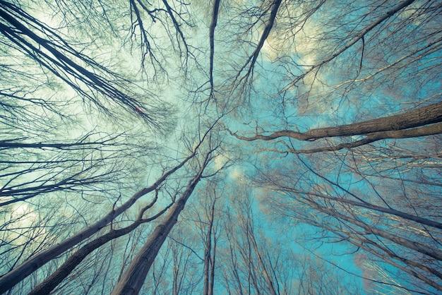Fundo da web de árvores