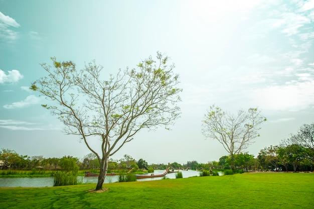 Fundo dado forma coração da paisagem da árvore.