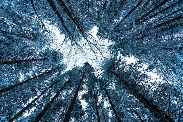 Fundo das copas das árvores