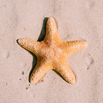 Fundo de areia com estrela do mar