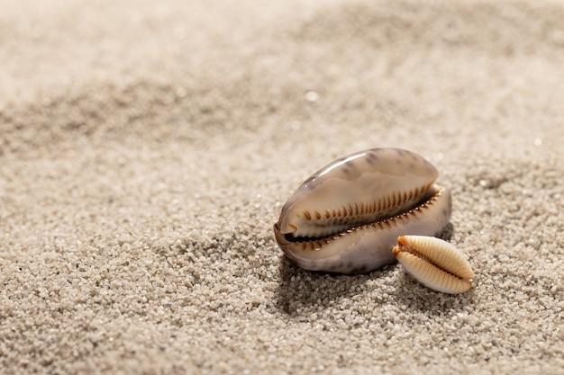 Fundo de areia limpa com duas conchas. textura da praia copiar close up do espaço