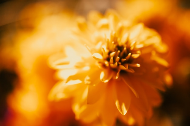 Fundo de arte floral.