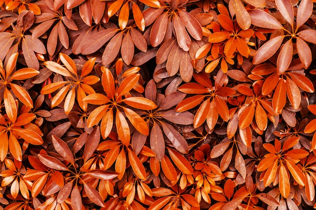 Fundo de árvore de folha vermelha