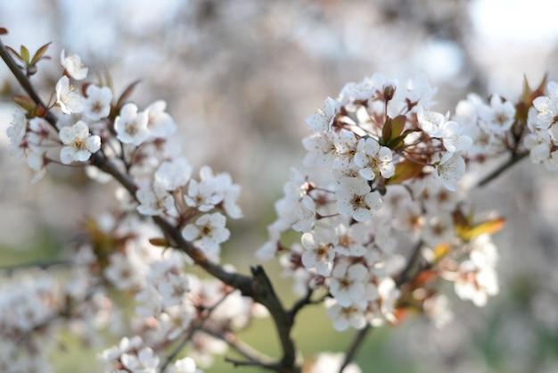 Fundo de banner com árvore florescendo