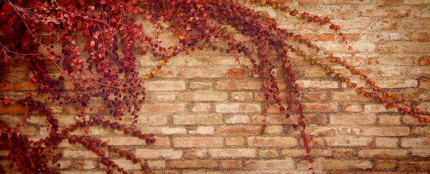Fundo de banner com folhas de outono