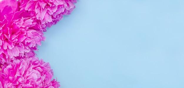 Fundo de banner de cartão, delicadas flores de peônias rosa em fundo azul com espaço de cópia com foco seletivo