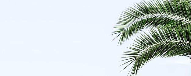 Fundo de banner em folhas de palmeira
