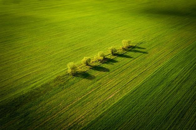 Fundo de bela paisagem com campo rural de macieiras, entre o campo de grama verde.
