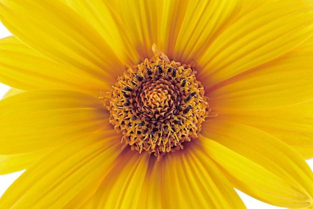 Fundo de botão em flor