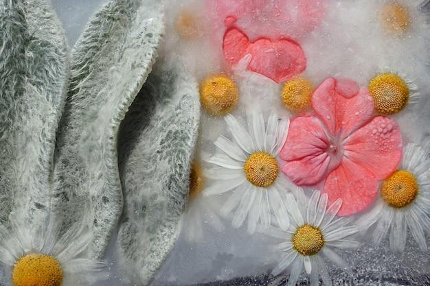 Fundo de camomila, pelargonium laranja e folhas com folhas de lã congeladas no gelo