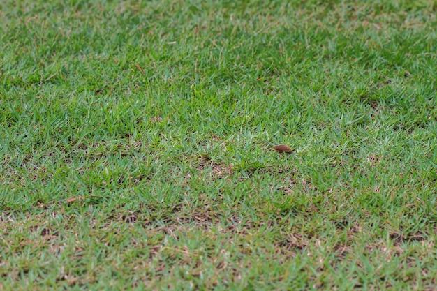 Fundo de campo de grama verde
