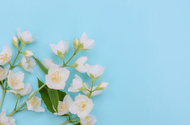 Fundo de cartão de felicitações, delicadas flores de jasmim em fundo azul com espaço de cópia com foco seletivo