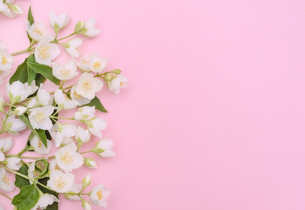 Fundo de cartão de felicitações, delicadas flores de jasmim em um fundo rosa claro com espaço de cópia com foco seletivo