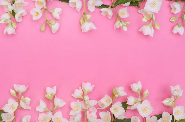 Fundo de cartão de felicitações, delicadas flores de jasmim em um fundo rosa com espaço de cópia com foco seletivo