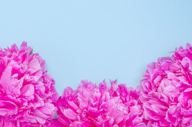 Fundo de cartão de felicitações, delicadas flores de peônias rosa em um fundo azul com espaço de cópia com foco seletivo