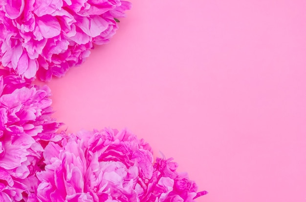 Fundo de cartão de felicitações, delicadas peônias rosa em pano de fundo rosa com espaço de cópia com foco seletivo