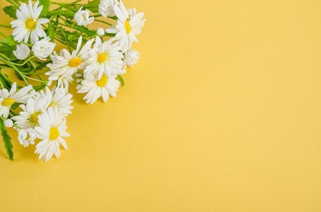 Fundo de cartão postal de camomila em amarelo