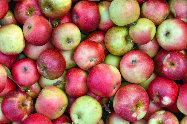 Fundo de casa de maçãs vermelhas e verdes de outono de um agricultor