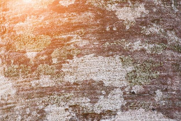 Fundo de casca de árvore com luz solar