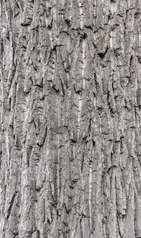 Fundo de casca de árvore perfeita
