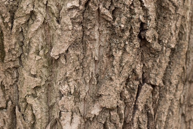 Fundo de casca de árvore sem emenda. textura tileable de brown da árvore velha.