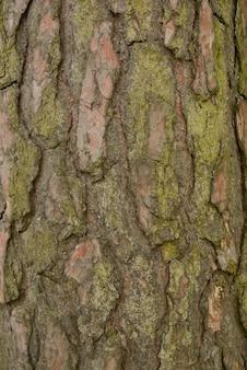 Fundo de casca de árvore velha