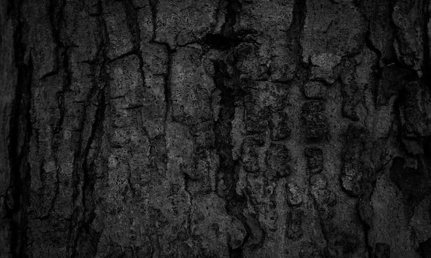 Fundo de casca preta naturalmente bela textura de casca de árvore velha