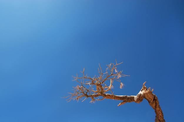Fundo de céu azul brilhante e galho de árvore para texto