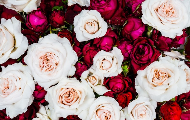 Fundo de closeup de rosas vermelhas e brancas