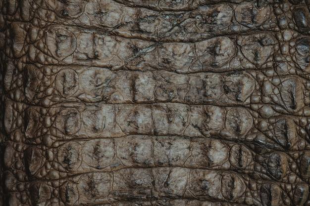 Fundo de closeup de textura de couro de crocodilo