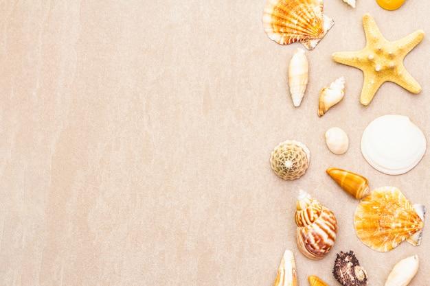 Fundo de conchas do mar, conceito de férias de verão