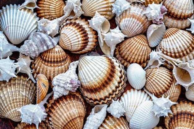 Fundo de conchas do mar em tons de marrom.