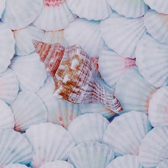 Fundo de conchas humor de férias. arte mínima