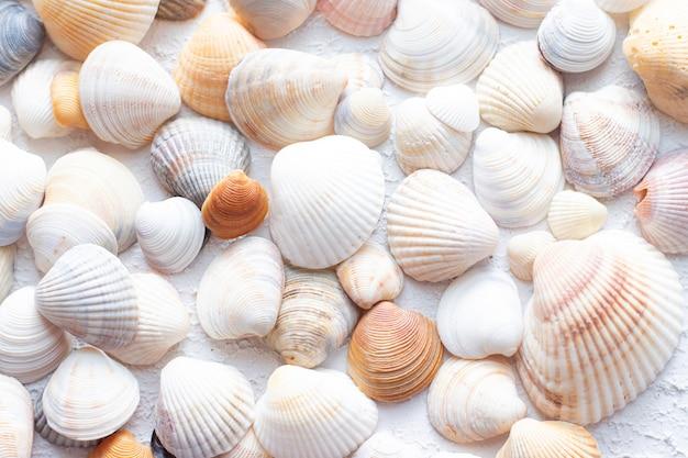 Fundo de conchas