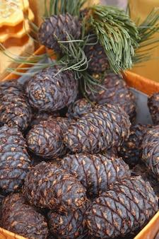 Fundo de cones de cedro. plantas medicinais para imunidade