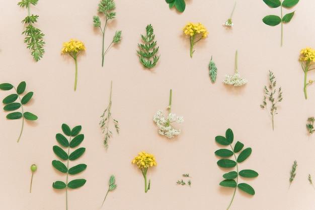 Fundo de cor floral com padrão natural de plantas e flores