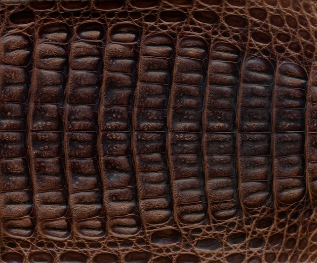 Fundo de couro texturizado de crocodilo