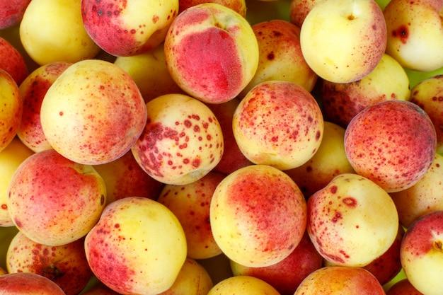 Fundo de damasco fruta amarelo-vermelho. muitos pequenos damascos orgânicos maduros no mercado.