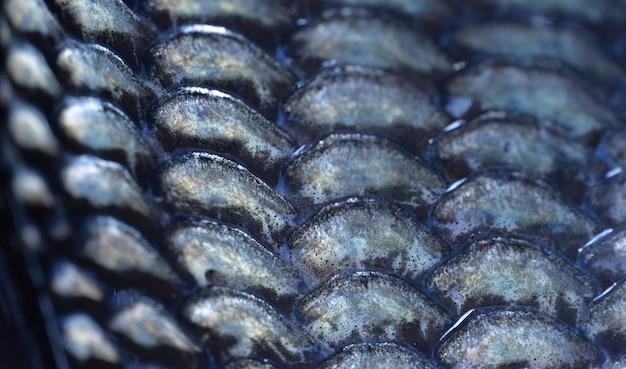 Fundo de escamas de peixe