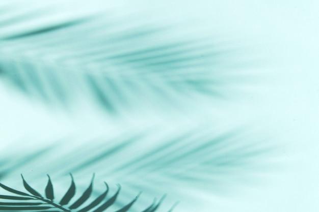 Fundo de férias de verão com sombras de folhas de palmeira