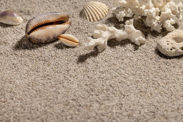 Fundo de férias de verão na praia com conchas e areia. closeup cópia do espaço