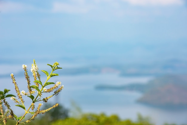 Fundo de flor branca imagem desfocada da barragem de sri nakarin