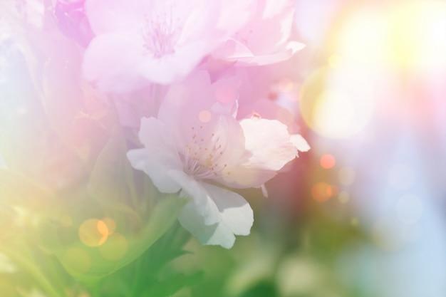 Fundo de flor de flor vintage