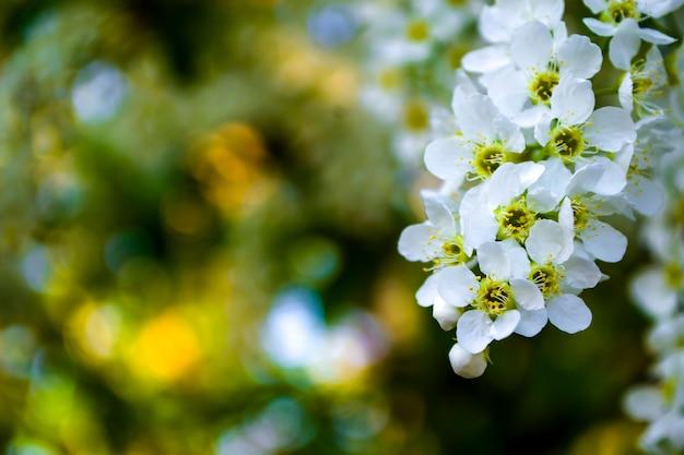 Fundo de flor de primavera bela cena natural com árvore florescendo e reflexo do sol
