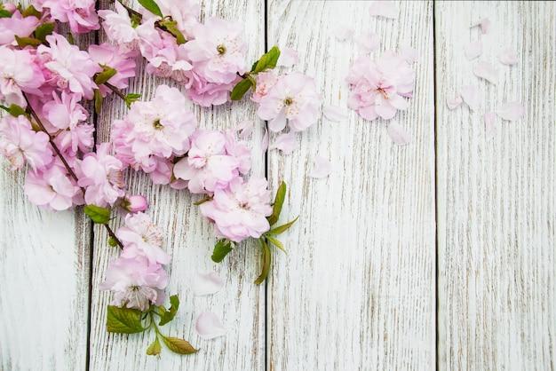 Fundo de flor de sakura de primavera