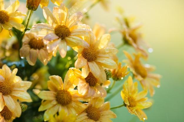 Fundo de flor vintage à luz do sol