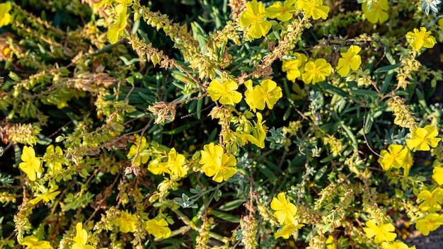 Fundo de flores amarelas no campo